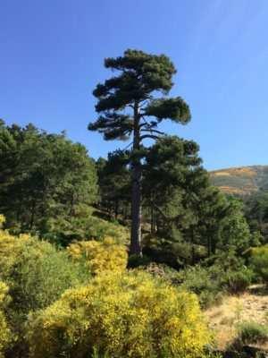 Mejor Árbol España