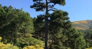 En bici hasta el árbol más bonito de España