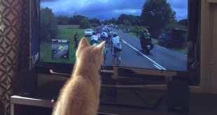 gato-Tour